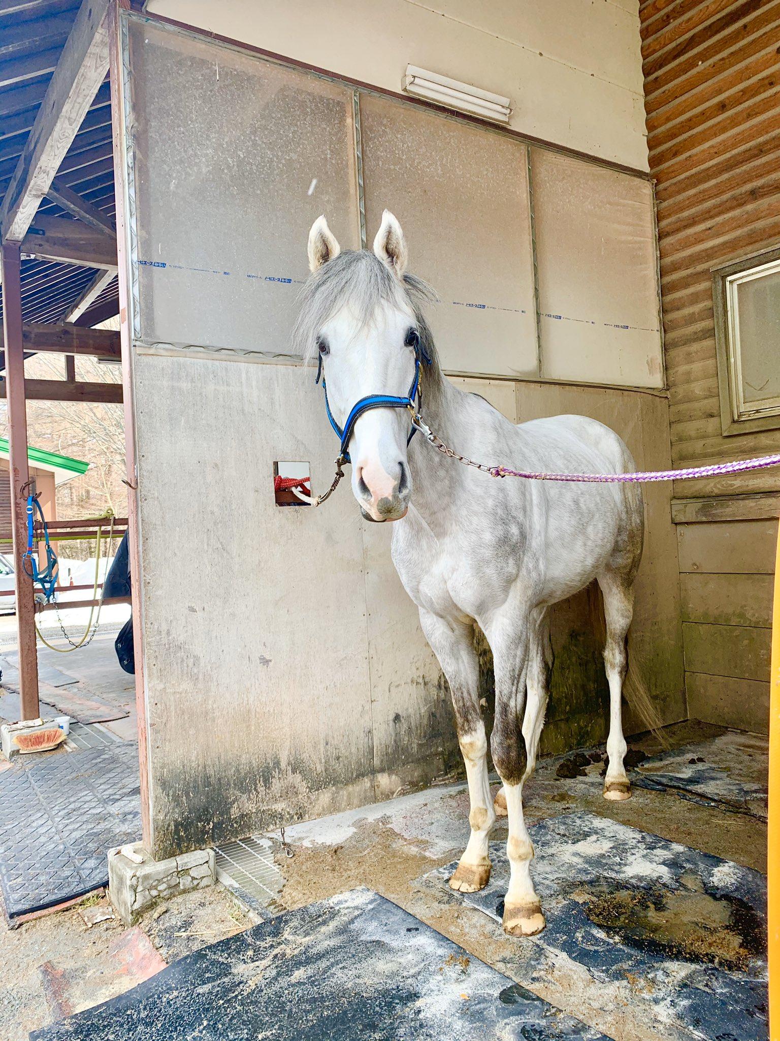 新しい引退馬支援を目指したい。『馬と歴史と未来の会』のサポーターズ制度とは?