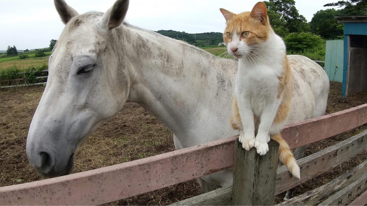 """馬が合う猫〜第1回 牧場にいる""""癒し""""な猫たち〜"""