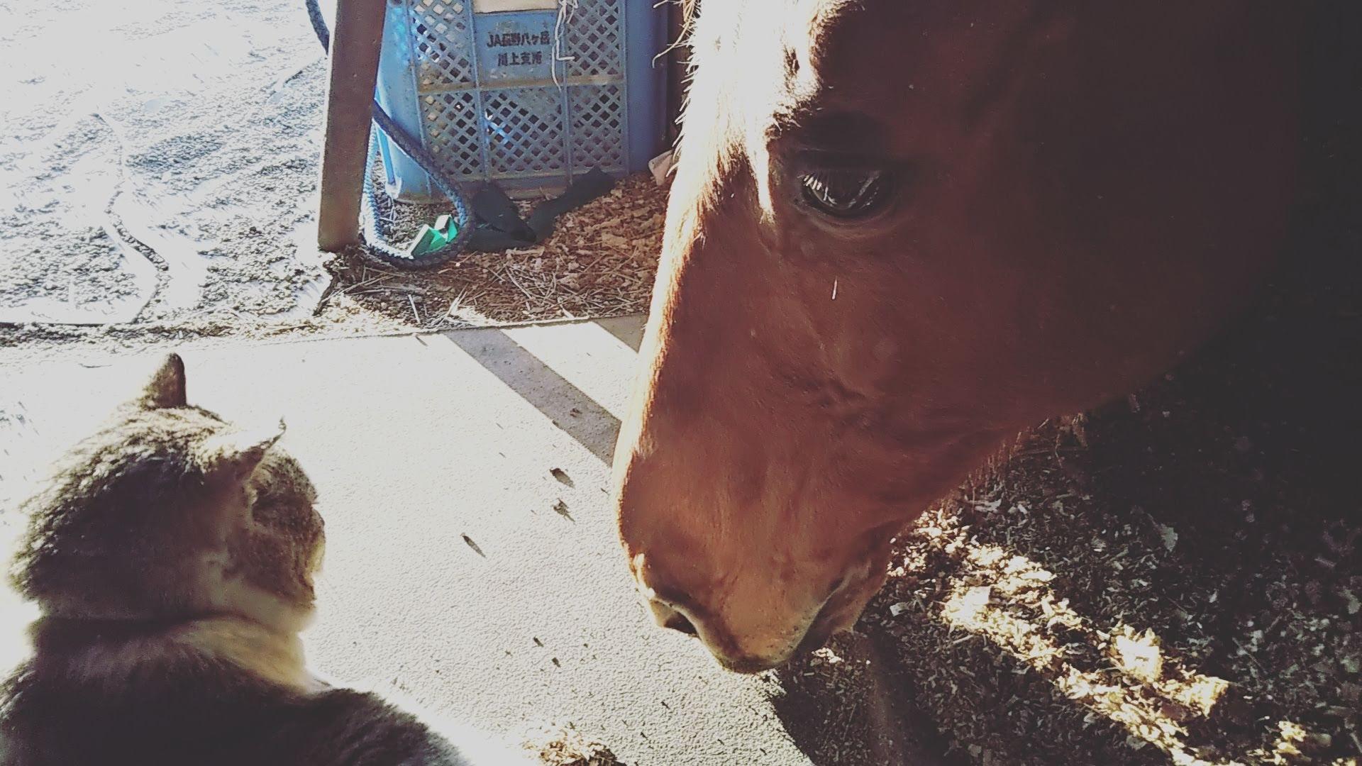 馬が合う猫〜第2回 馬の近くで働く!?猫たち〜