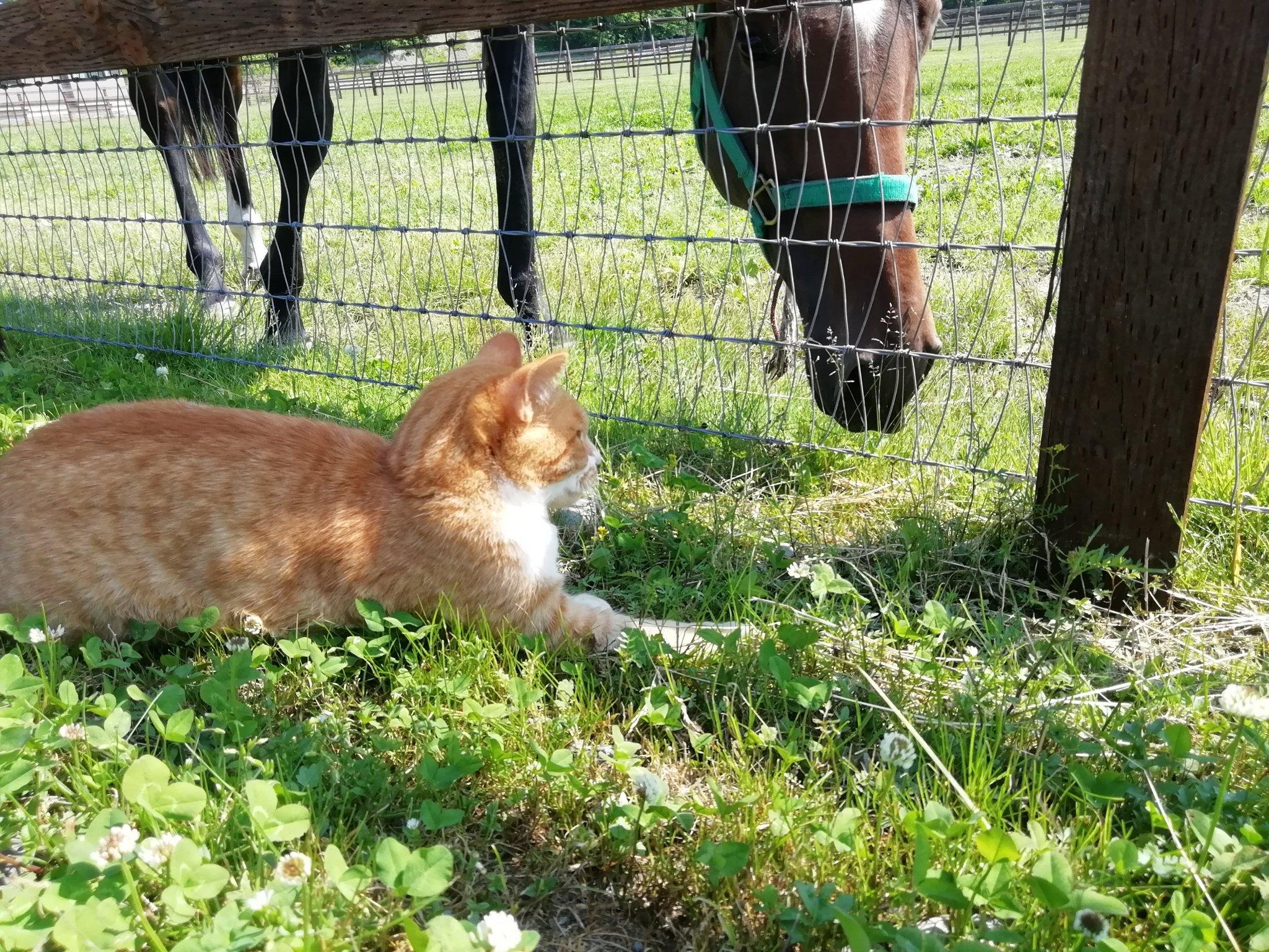 馬が合う猫〜第3回 馬の近くで活躍する猫たち〜