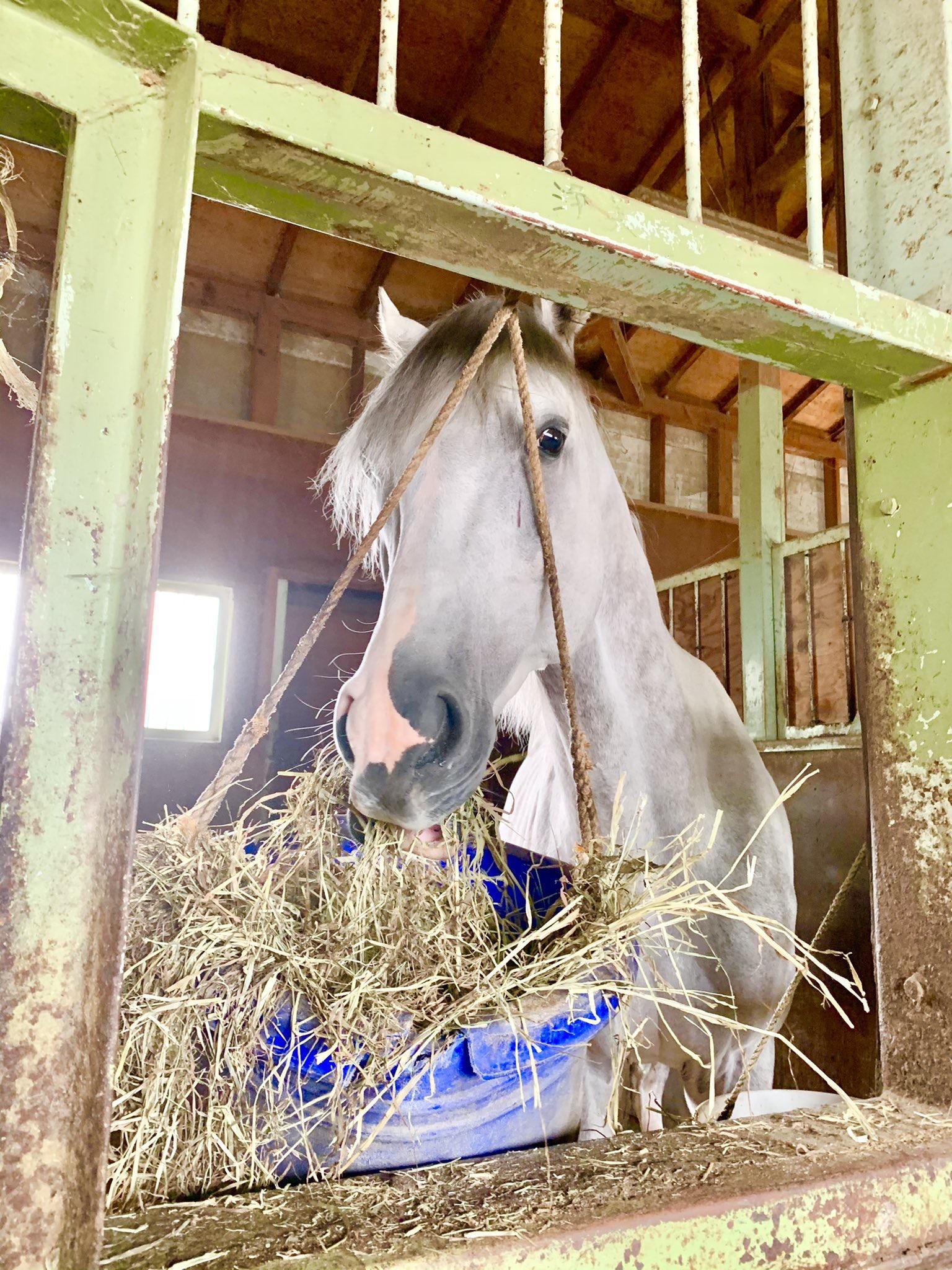 [引退馬支援]クラウドファンディング達成と、これから目指す『馬の未来』