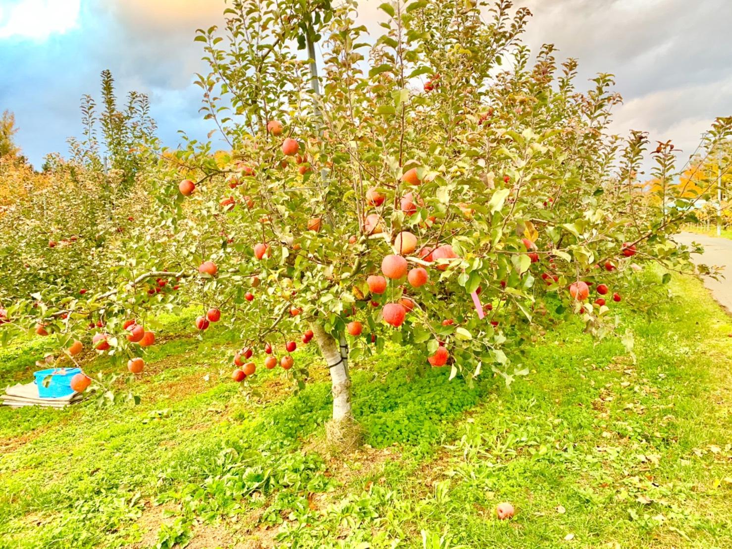 [引退馬支援]馬ふん堆肥を広めるために、りんごの木を共同所有。
