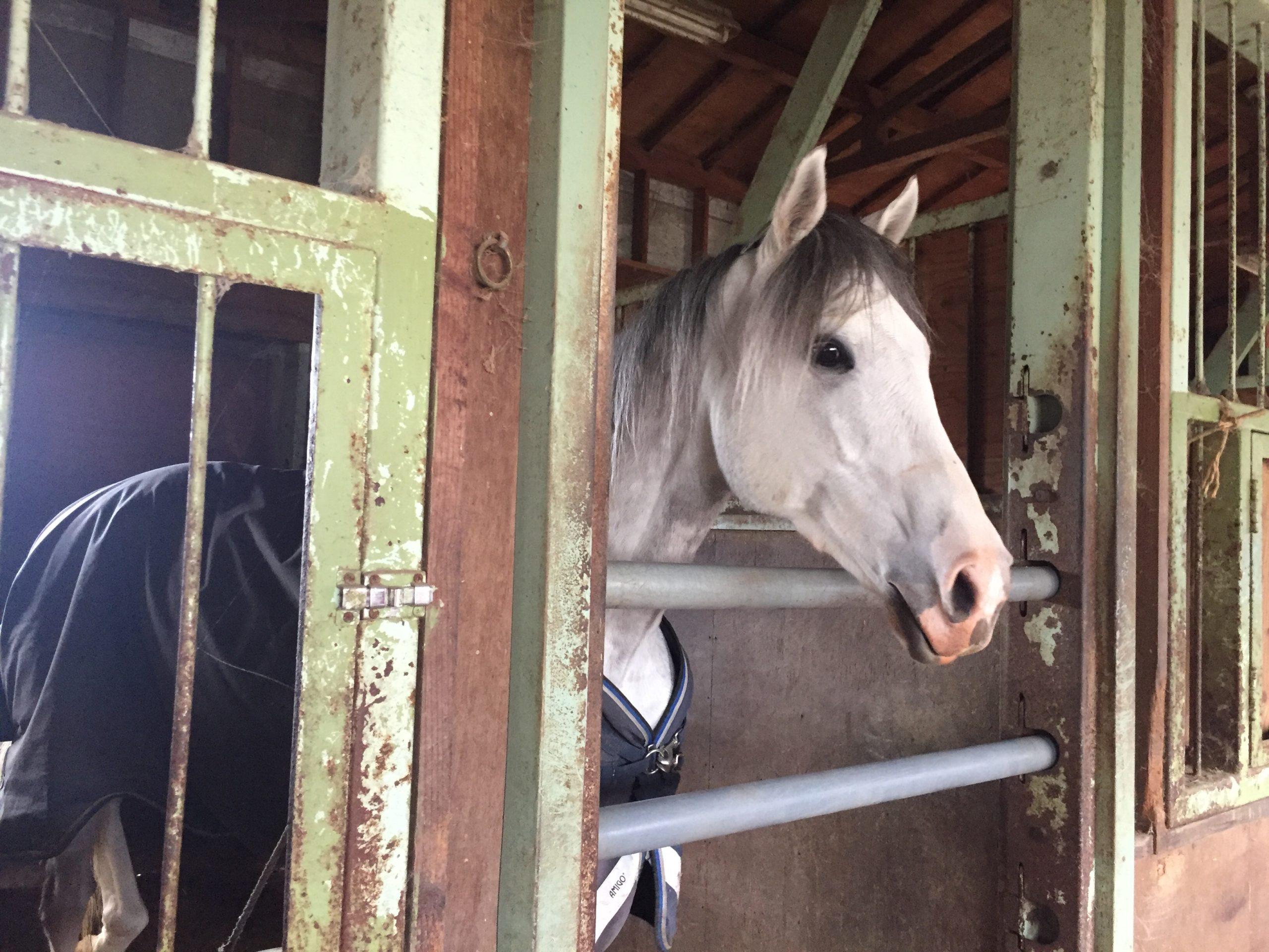 [引退馬支援]りんごジュースで馬を救う! 『FUMIERPROJECT』の取り組みについて。