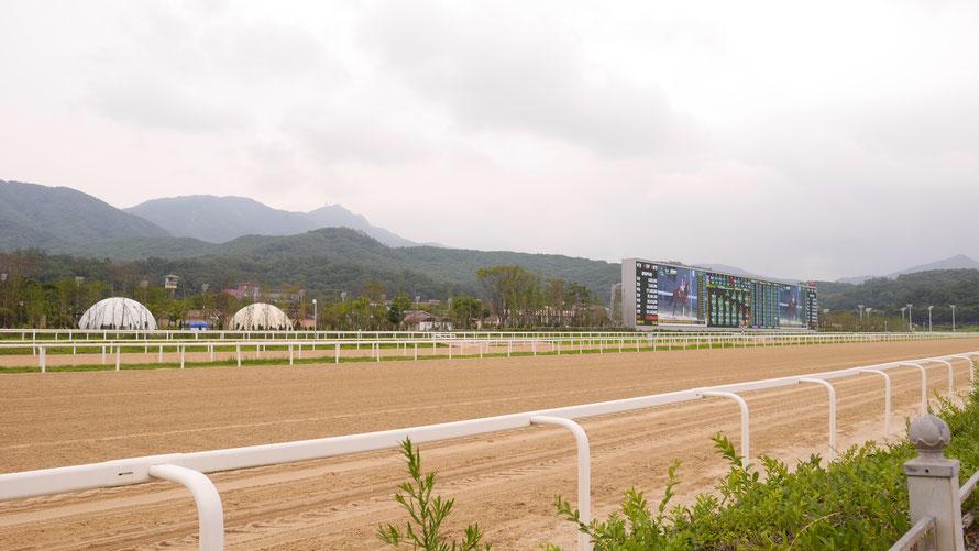 映画一本分の空旅で着く海外競馬 ~ 韓国『Let's Run Park Seoul』②