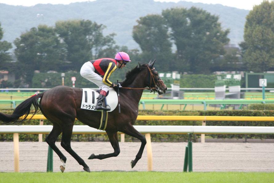史上23頭目の二冠馬~ドゥラメンテ~