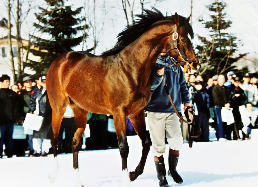 [競馬タイムトラベル]2002年中山記念・トウカイポイント