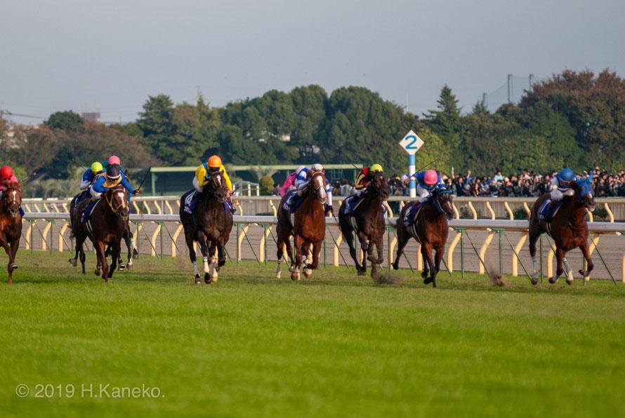 競馬の愉悦の王道は、モルトの余韻のように ~2008年 天皇賞・秋に寄せて