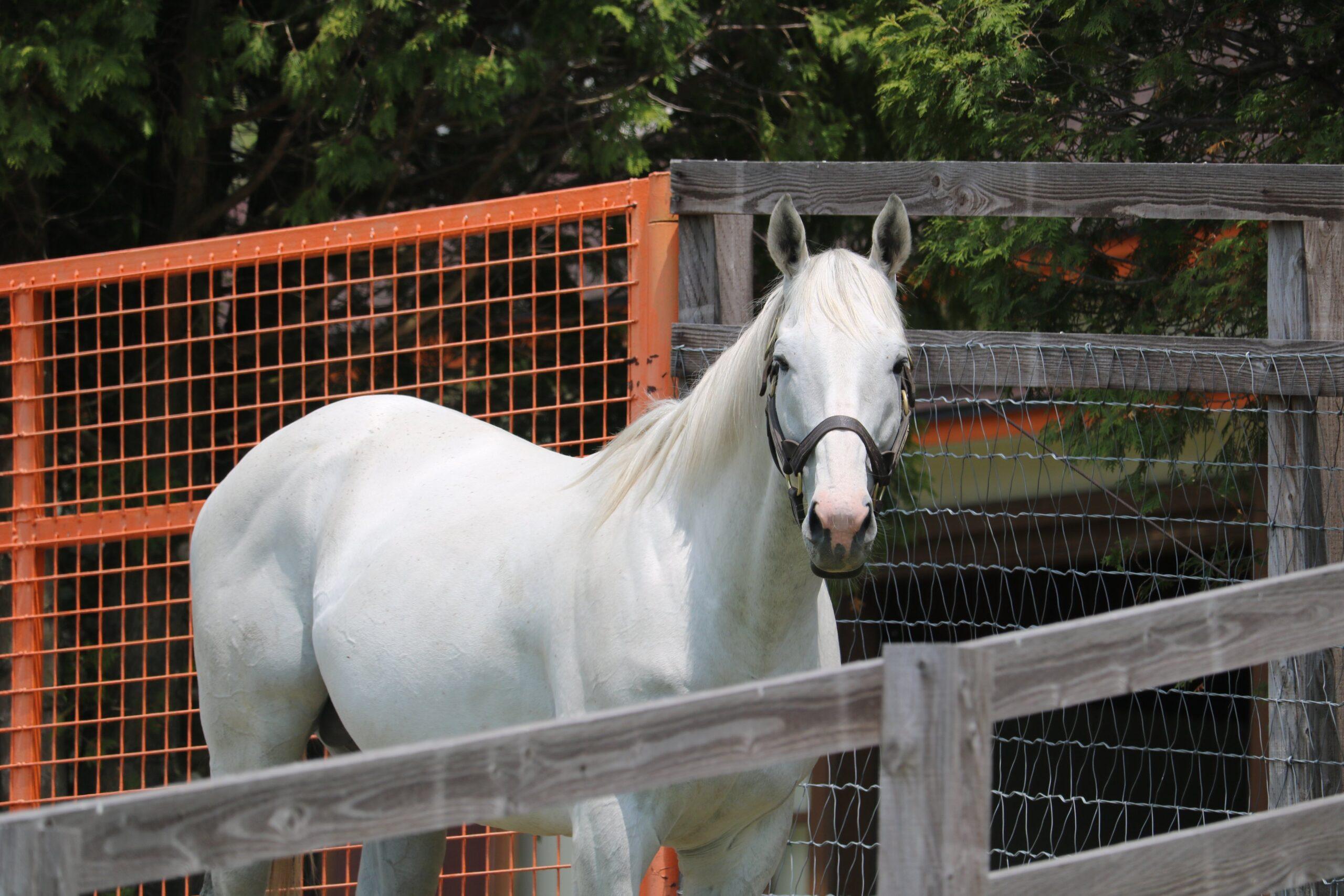 競走馬に会いに行く際、絶対に守ってほしい『牧場見学の9箇条』とは?