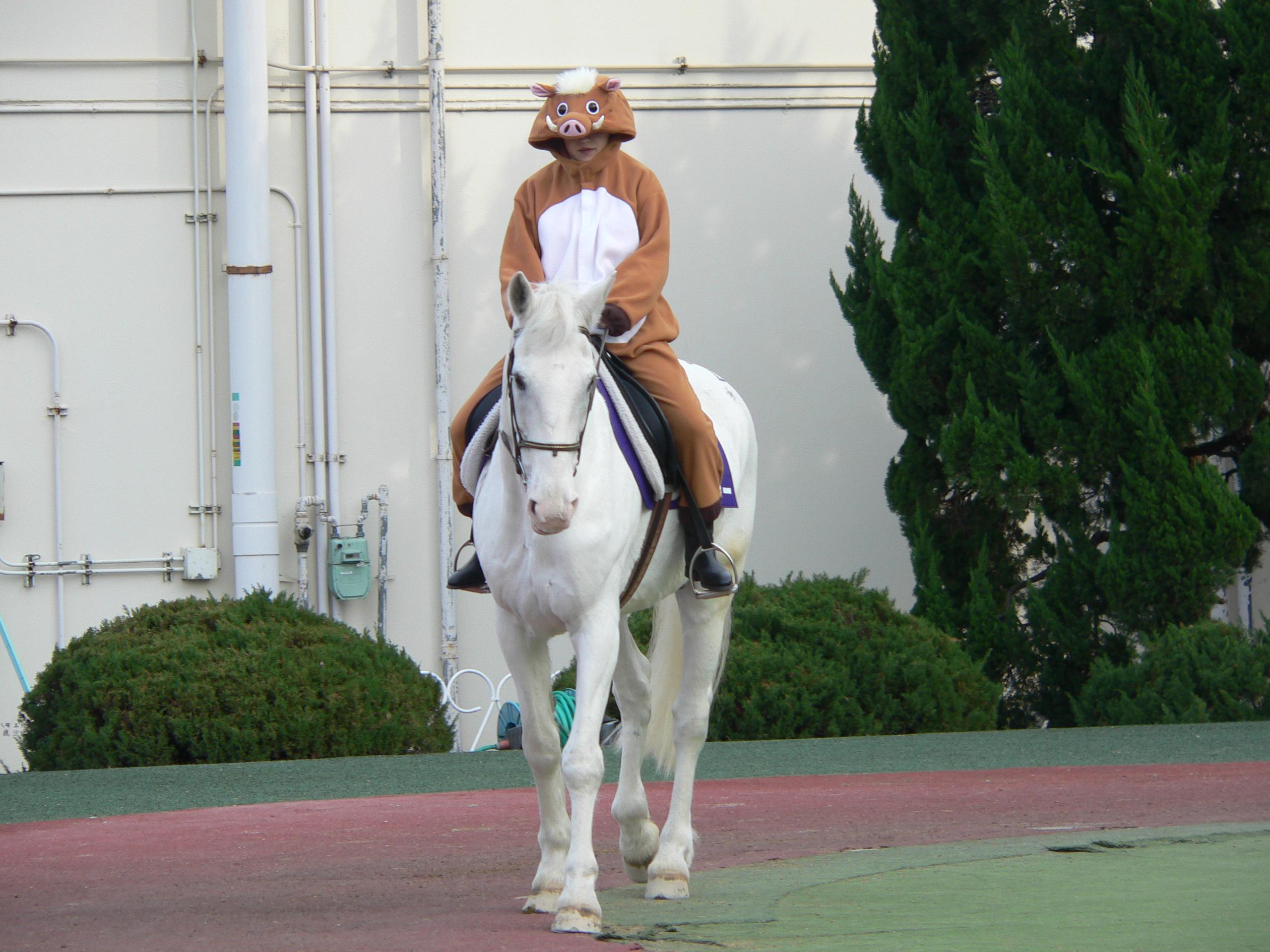 [写真]園田競馬場のアイドル誘導馬、マコーリー
