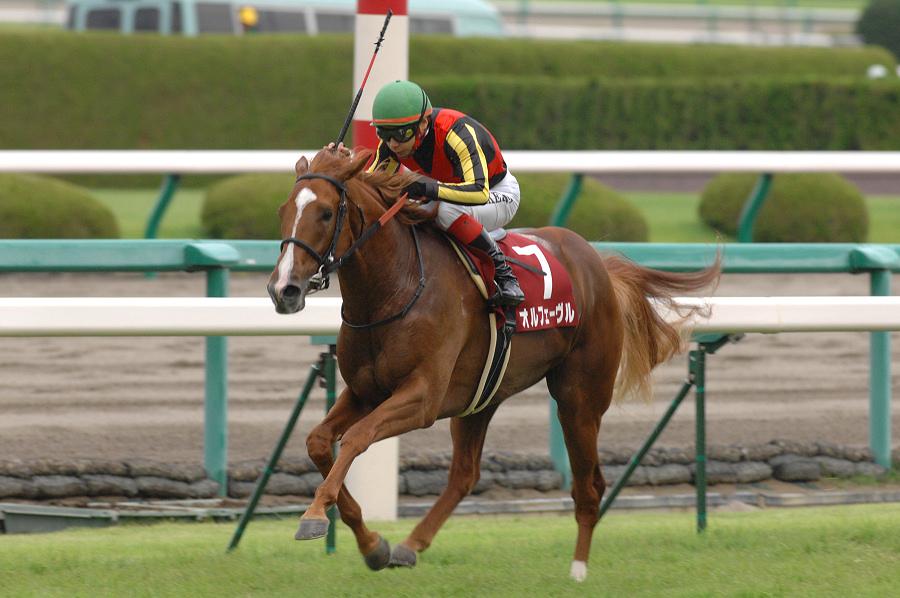 [神戸新聞杯]オルフェーヴルにゴールドシップ……神戸新聞杯を駆け抜けたステイゴールド産駒たち。