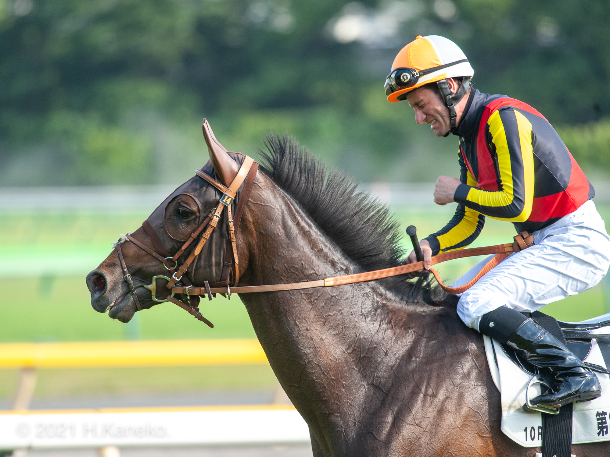 直線に血をたぎらせた、二冠馬。夢のように駆け抜けたドゥラメンテの生涯。